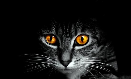 Katten naar buiten laten - dierenwinkel Geleen