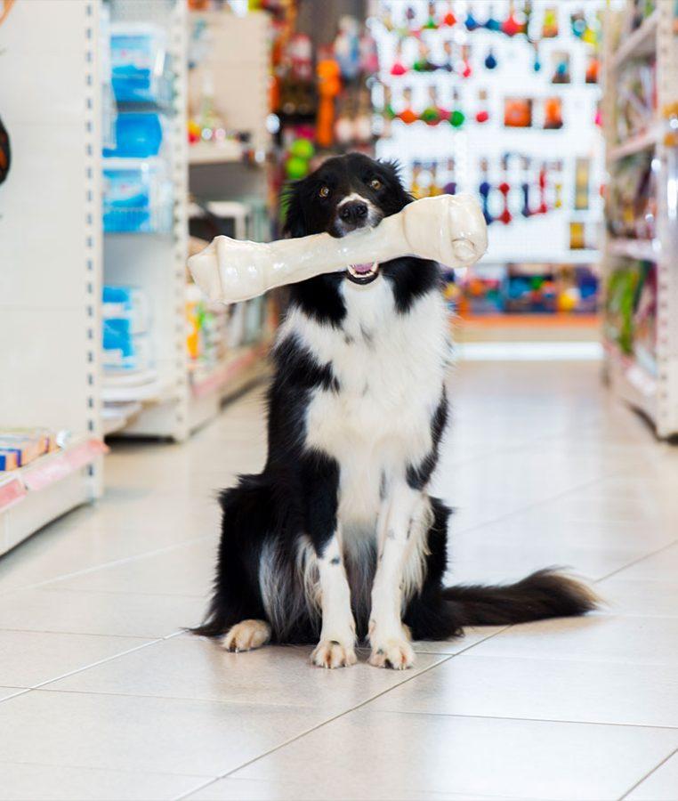 hondenbenodigheden